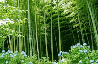bamboo-forest-with-flower11