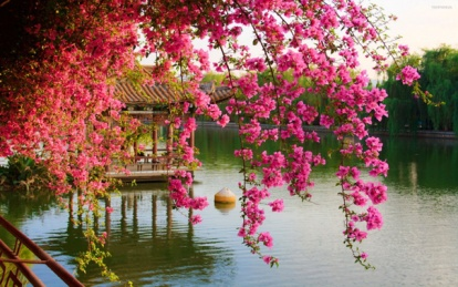 wiosna_2560x1600_061_kwiaty__woda11